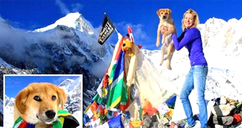 Stray dog climbed mt everest